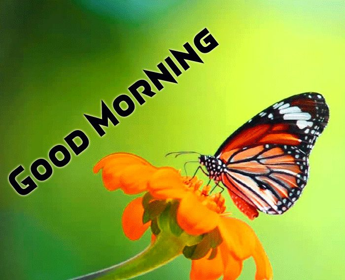 good morning butterfly
