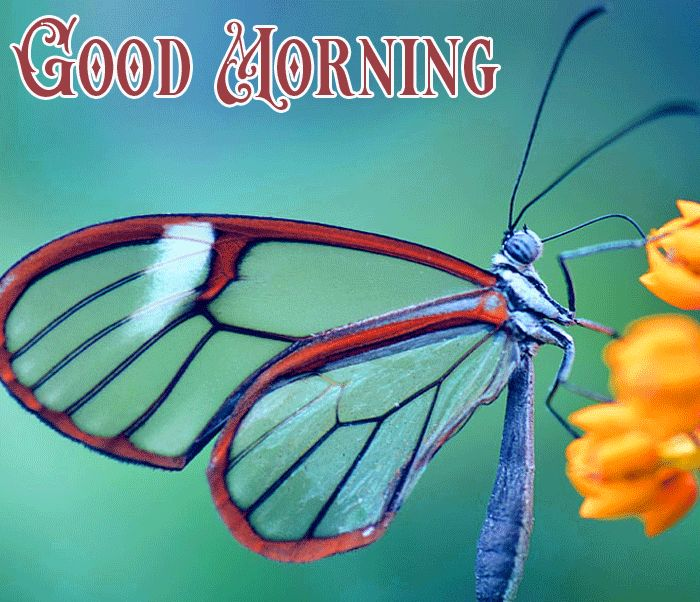 good morning with butterfly
