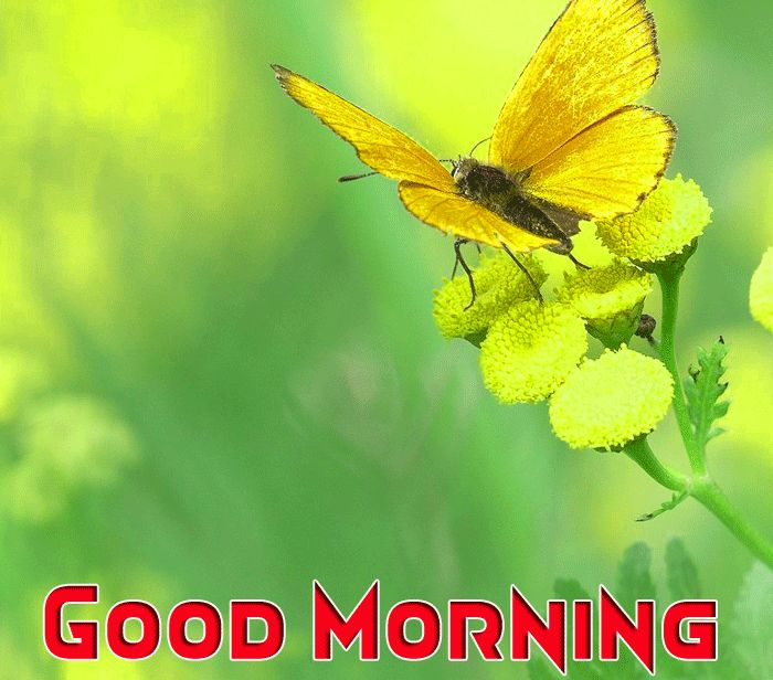 beautiful butterfly picture