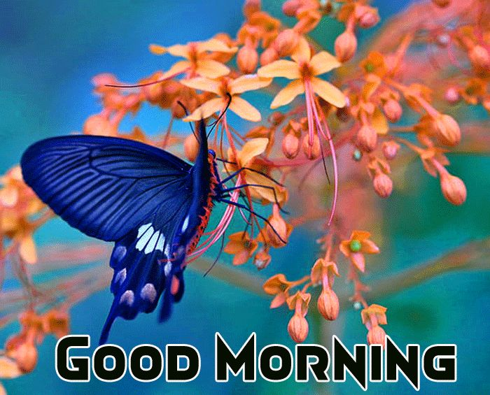 butterfly image with good morning message