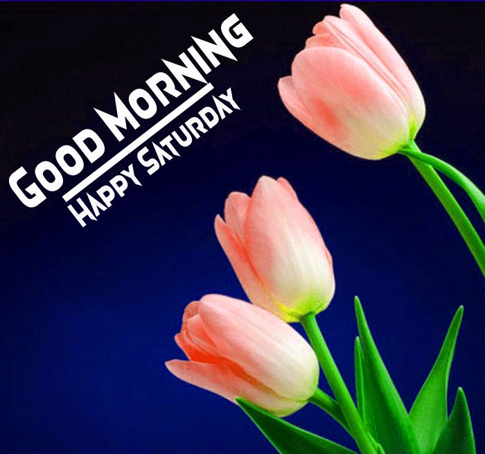 good morning images with tulip flowers