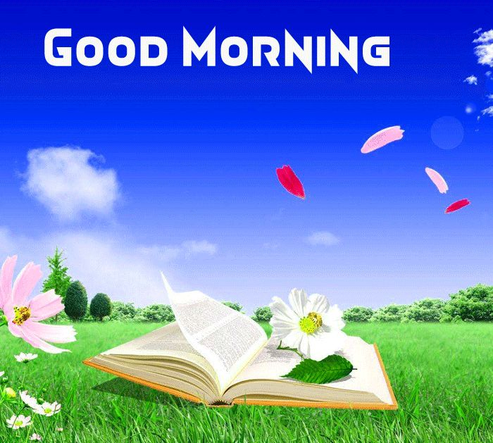 good morning nature picture