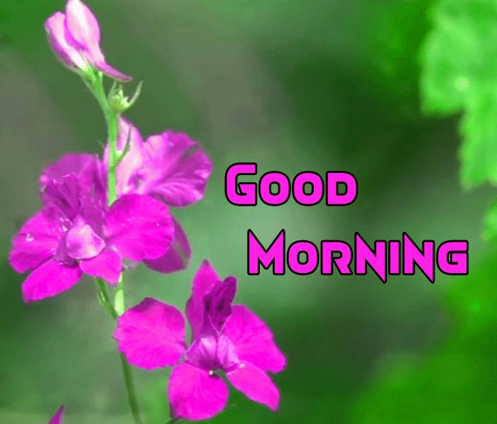 gud mrng pics with flowers