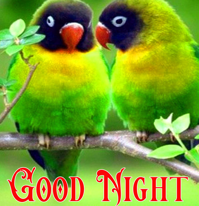 Good Night bird love hd download