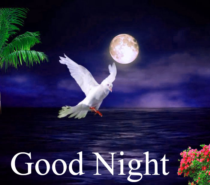 Good Night fly bird hd wallpaper download