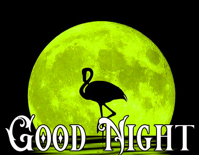 Good Night full moon with bird hd download