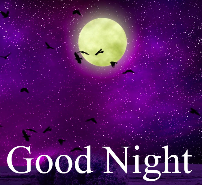 Good Night moon bird fly images hd