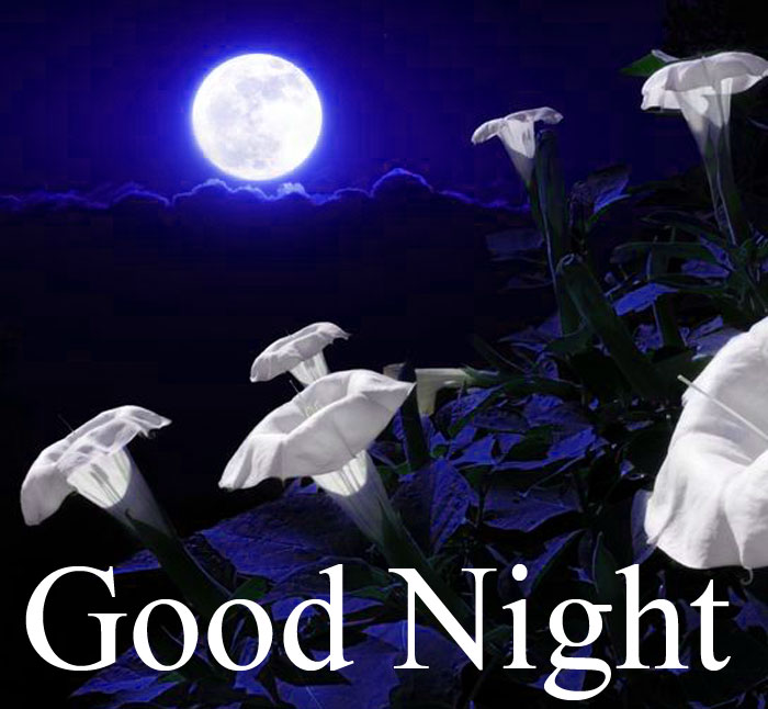 Good Night moon flower pics hd download