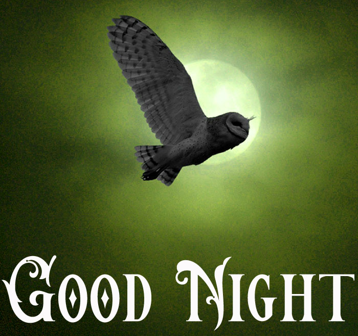 Good Night owl full moon imgaes hd download Copy