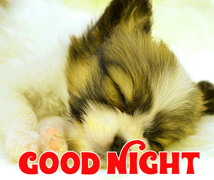 Good Night puppy sleeping images hd download Copy