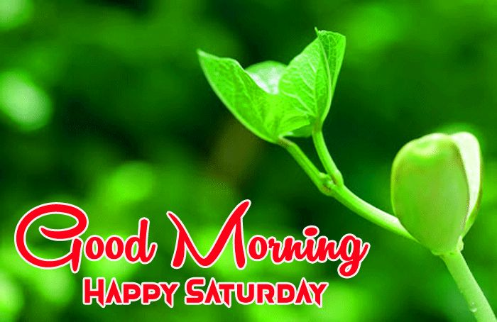 best green nature Good Morning Happy Saturday images