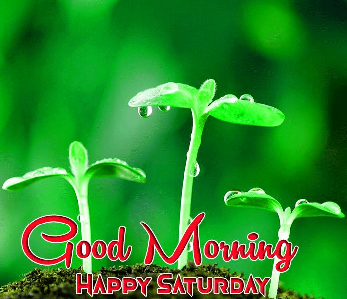 best plants Good Morning Happy Saturday images