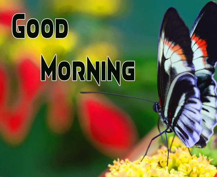 best vutterfly Good Morning Happy Saturday pics