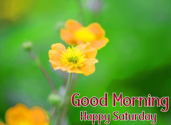 best yellow flower Good Morning Happy Saturday images hd