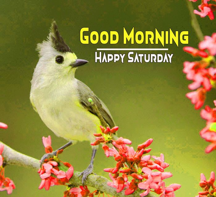 bird and flower Good Morning Happy Saturday images hd