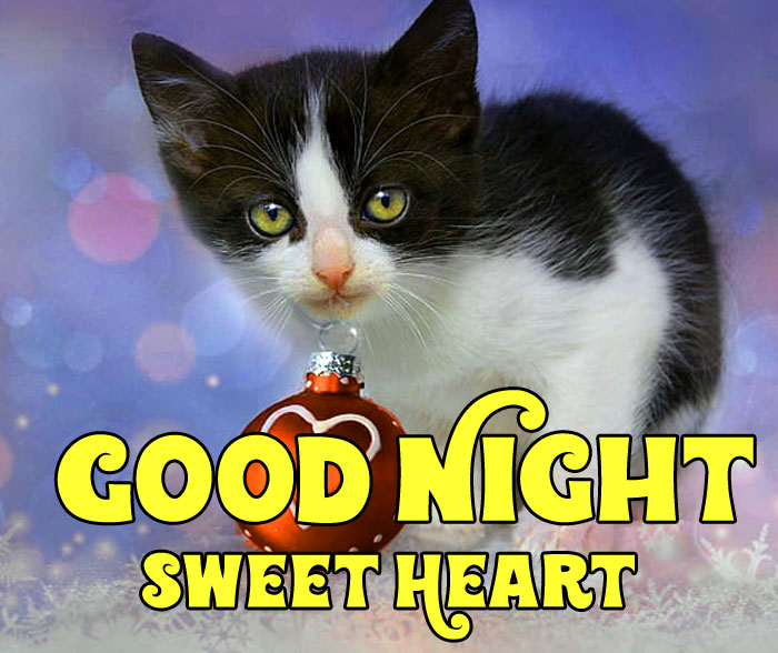 cats Good Night Sweet Heart images hd