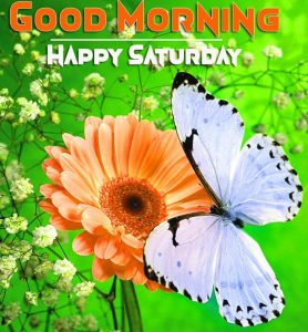 flower and butterfly Good Morning Happy Saturday images