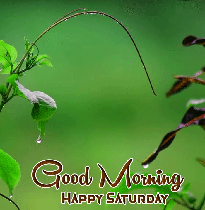 flower greenery Good Morning Happy Saturday images hd