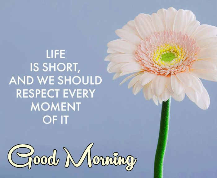 good morning message with flowers image