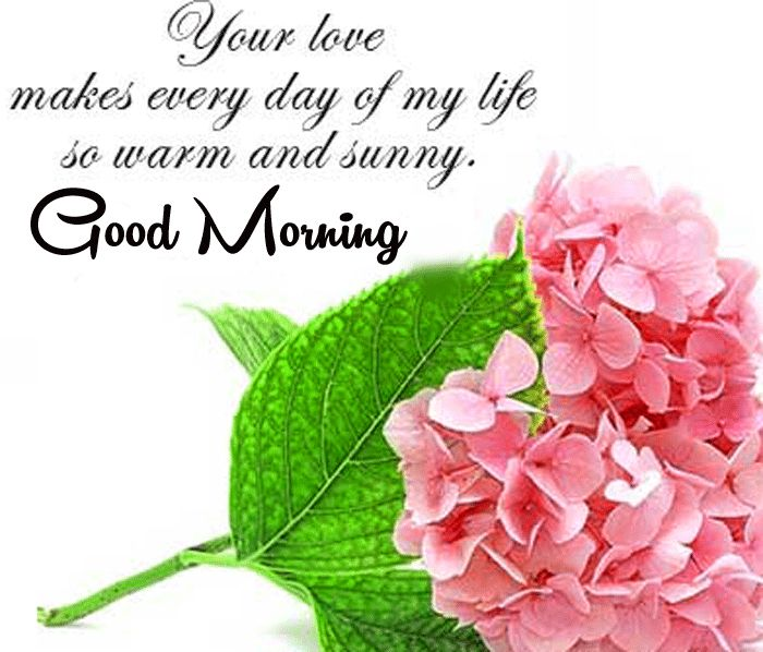 good morning wishes with pink roses