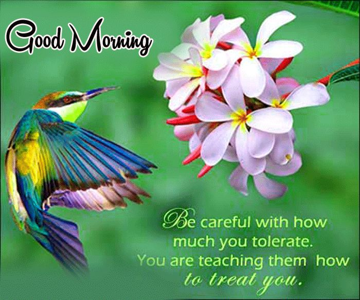 goodmorning greetings wallpapers with flowers