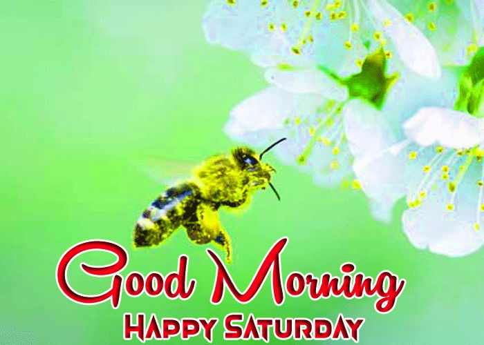 grid bee flower Good Morning Happy Saturday images
