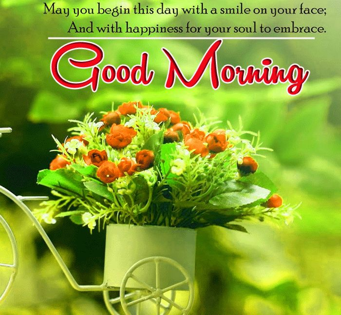 images of flowers with good morning wishes download