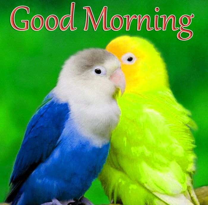 latest bird parrots Good Morning images hd