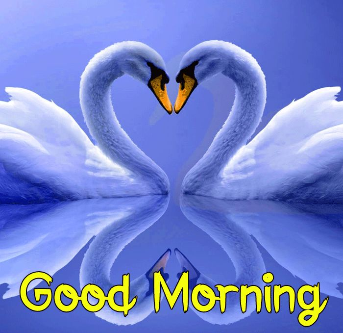 latest swan heart Good Morning images hd