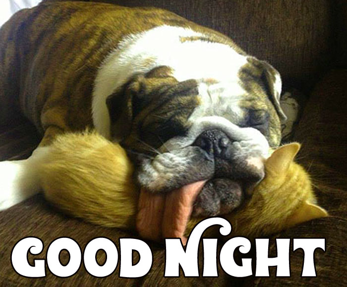 puppy Good Night hd wallpaper download