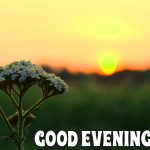 Best collection of beautiful good night wishes images and wallpapers