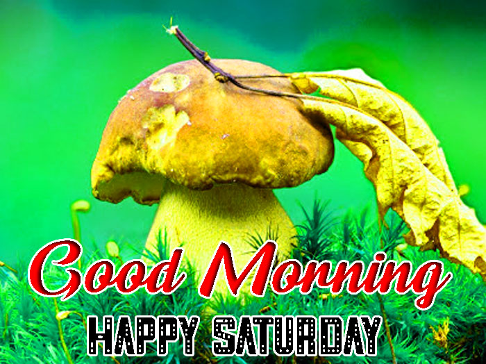 awesome Good Morning Happy Saturday images hd