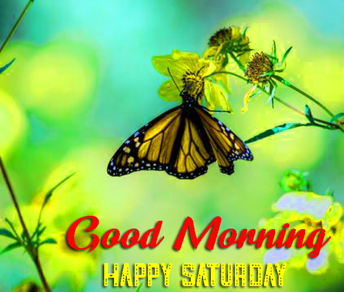 best butterfly Good Morning Happy Saturday images hd