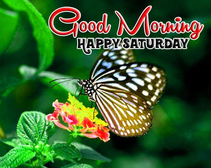 butterfly Good Morning Happy Saturday image hd