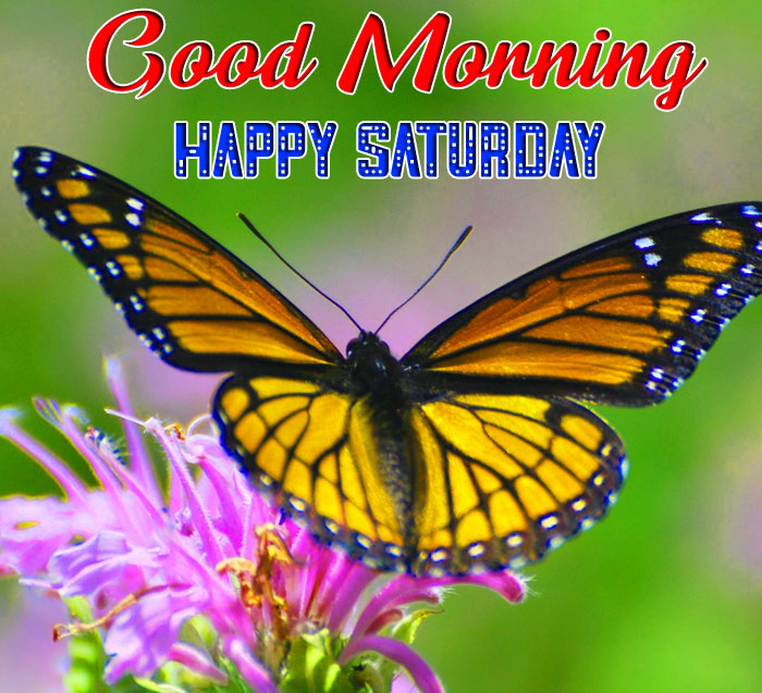 butterfly Good Morning Happy Saturday images hd