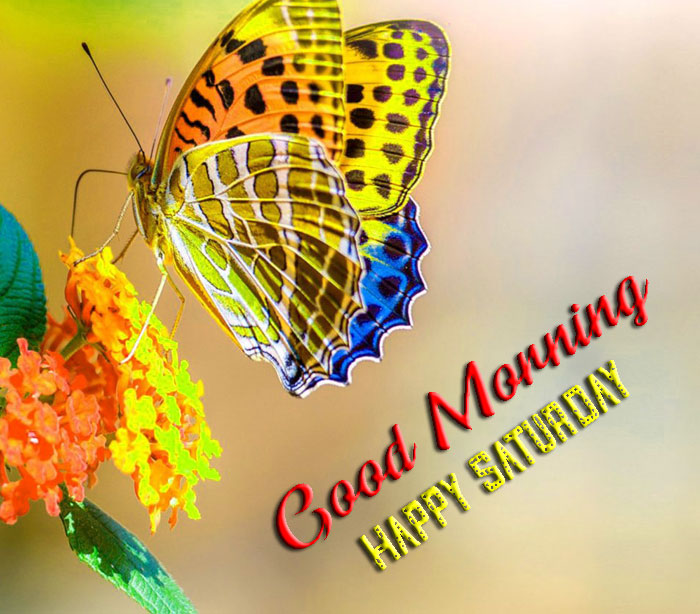 colorful butterfly Good Morning Happy Saturday images hd