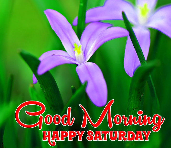 flower Good Morning Happy Saturday images hd