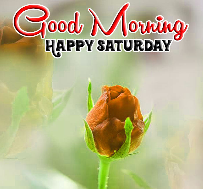 flower love rose Good Morning Happy Saturday images hd