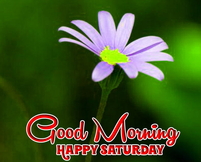 latest Good Morning Happy Saturday white flower images hd