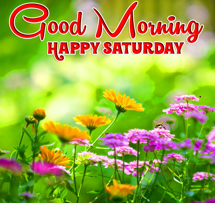 latest field Good Morning Happy Saturday images hd