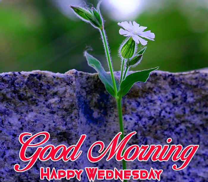 nice Good Morning Happy Wednesday images hd