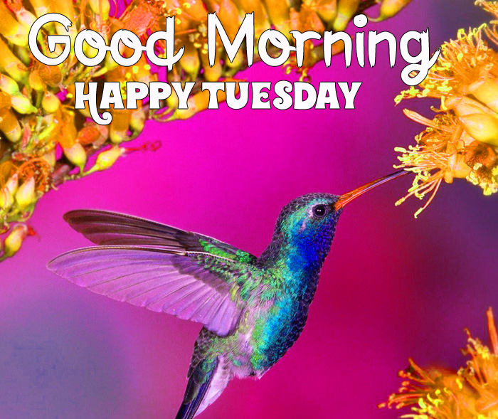 Good Morning Happy Tuesday bird and flower hd