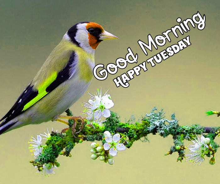 Good Morning Happy Tuesday bird hd photo