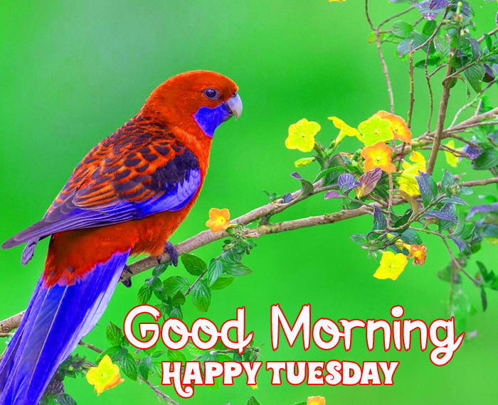 Good Morning Happy Tuesday colorful bird photo