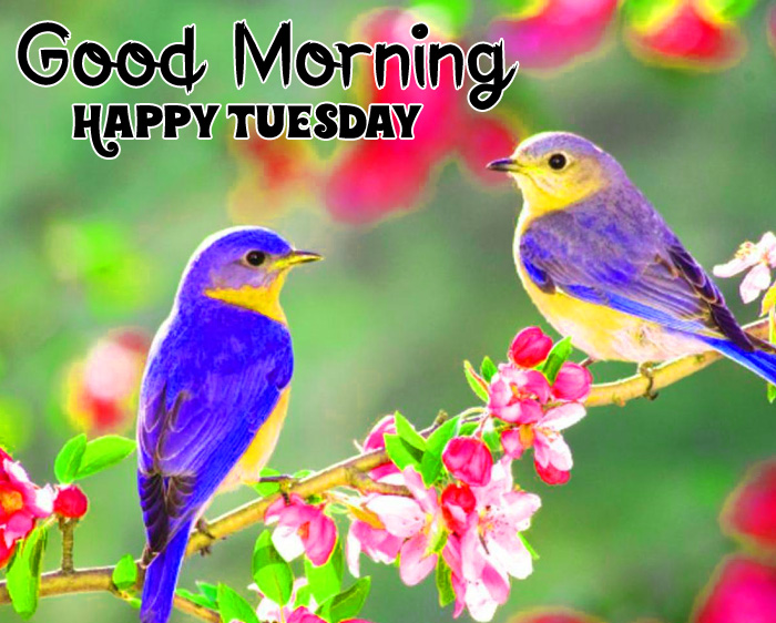 Good Morning Happy Tuesday colorful images