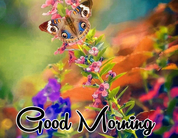 Good Morning flower images