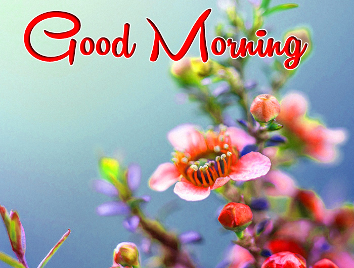Good Morning purple flower images