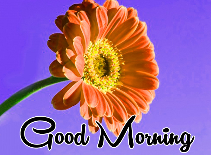 Good Morning red flower images hd