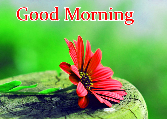 Good Morning red flower pics hd