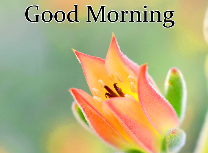 Good Morning yellow flower images
